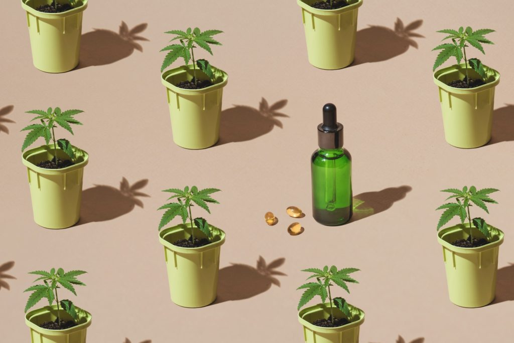 Brands Creating Great CBD Based Beauty Products